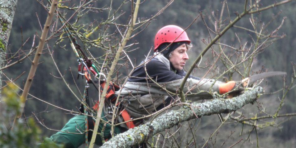 Baumpflege mittels Seilklettertechnik, Feldahorn, Handsäge, Schwäbisch Hall