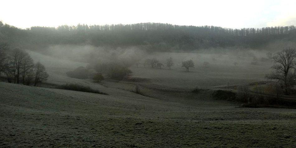 Streuobstwiese, Rauhreif, Morgenstimmung, Obstbäume im Nebel, Schwäbisch Hall